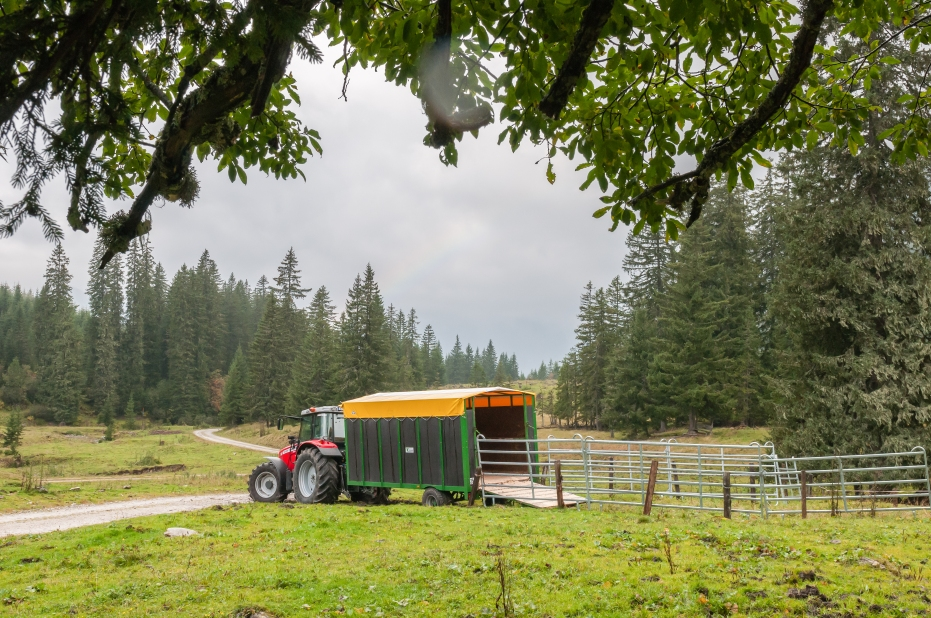 Almabtrieb mit dem Traktor