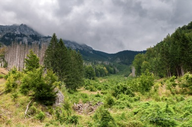 Urwald Dürrenstein