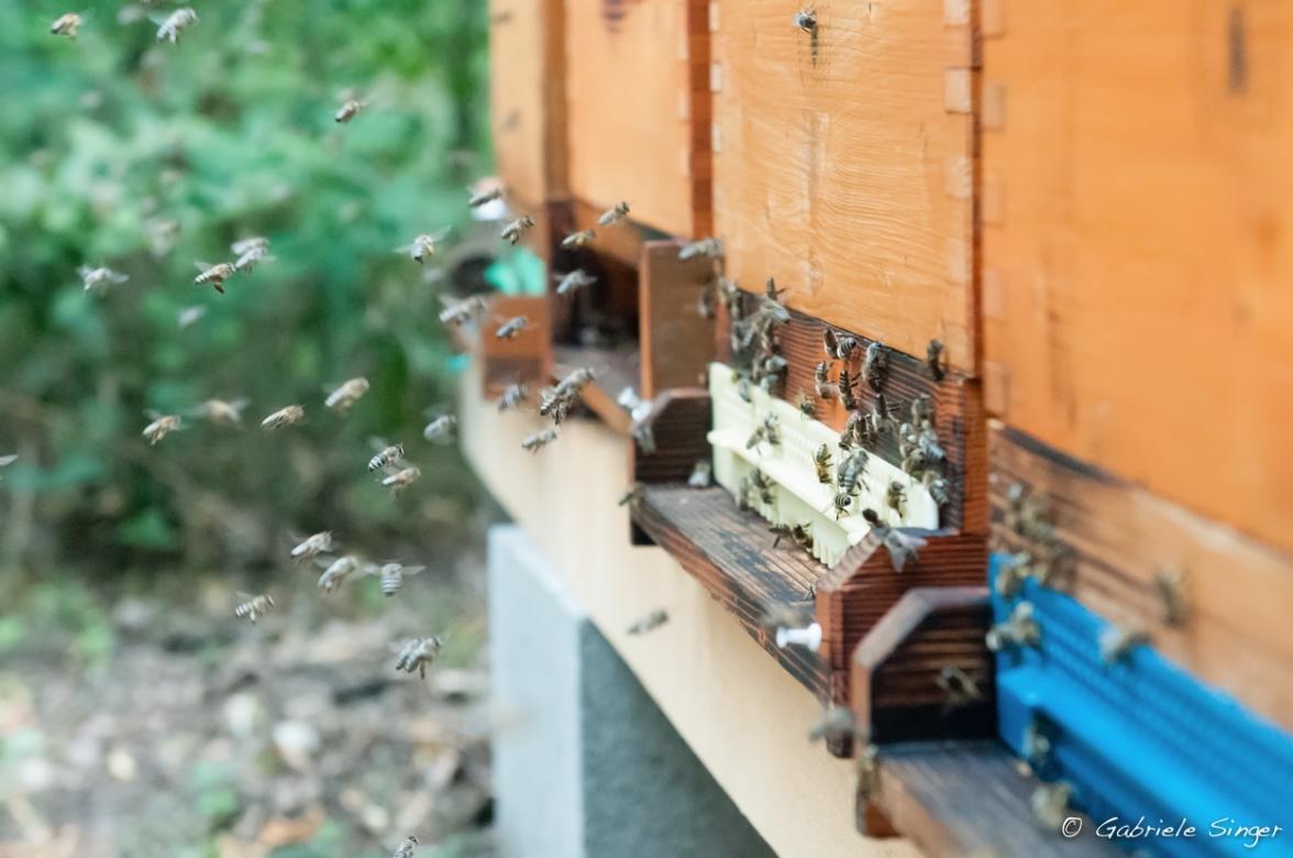 Einfluglöcher der Bienen