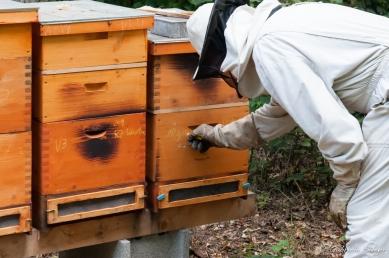 Bienenstock kennzeichnen - Königin gelb